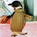 Pingvin_