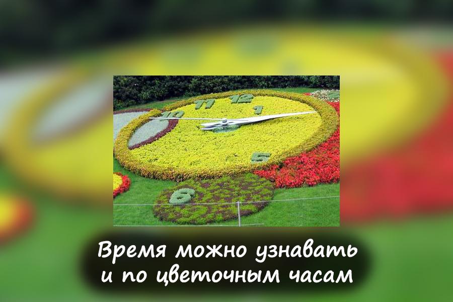 Колокольчик_4