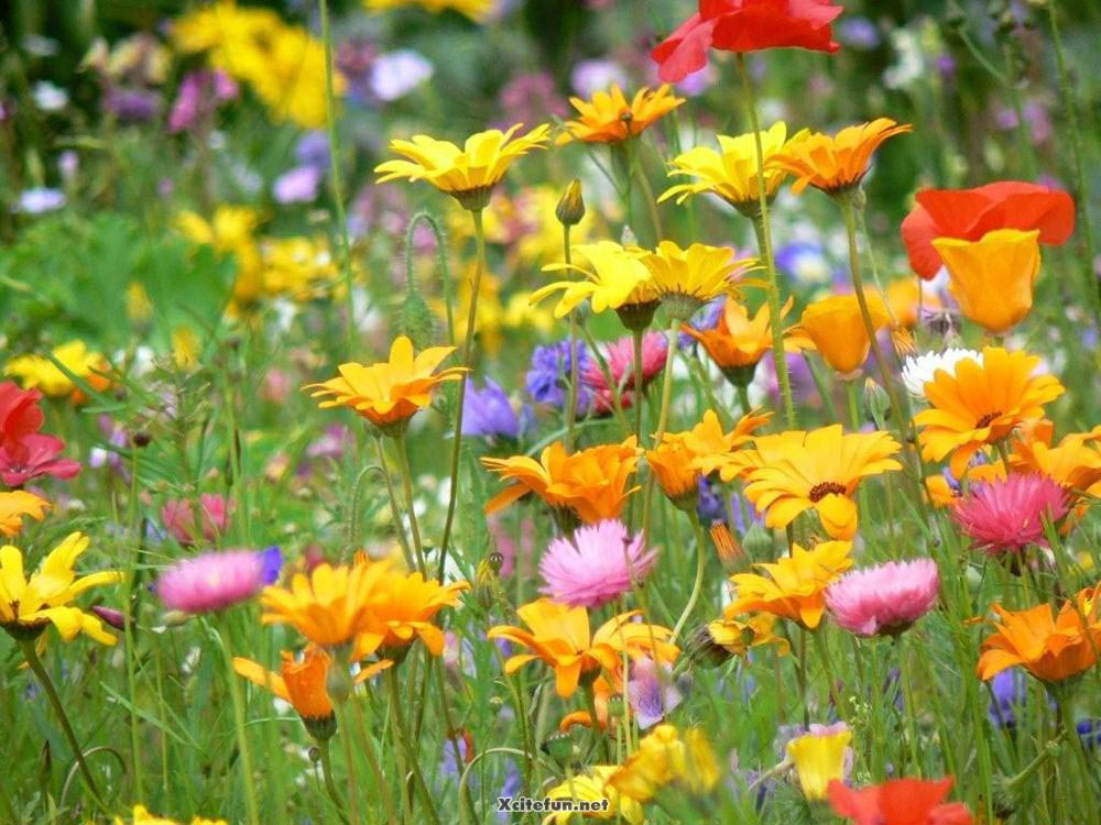 303328,xcitefun-colors-of-nature-flowers-beauty-17