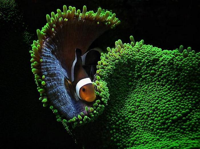 01-1_В подводных Божьих садах есть и тенистые аллеи