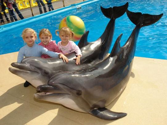 Дельфины дружат с людьми...