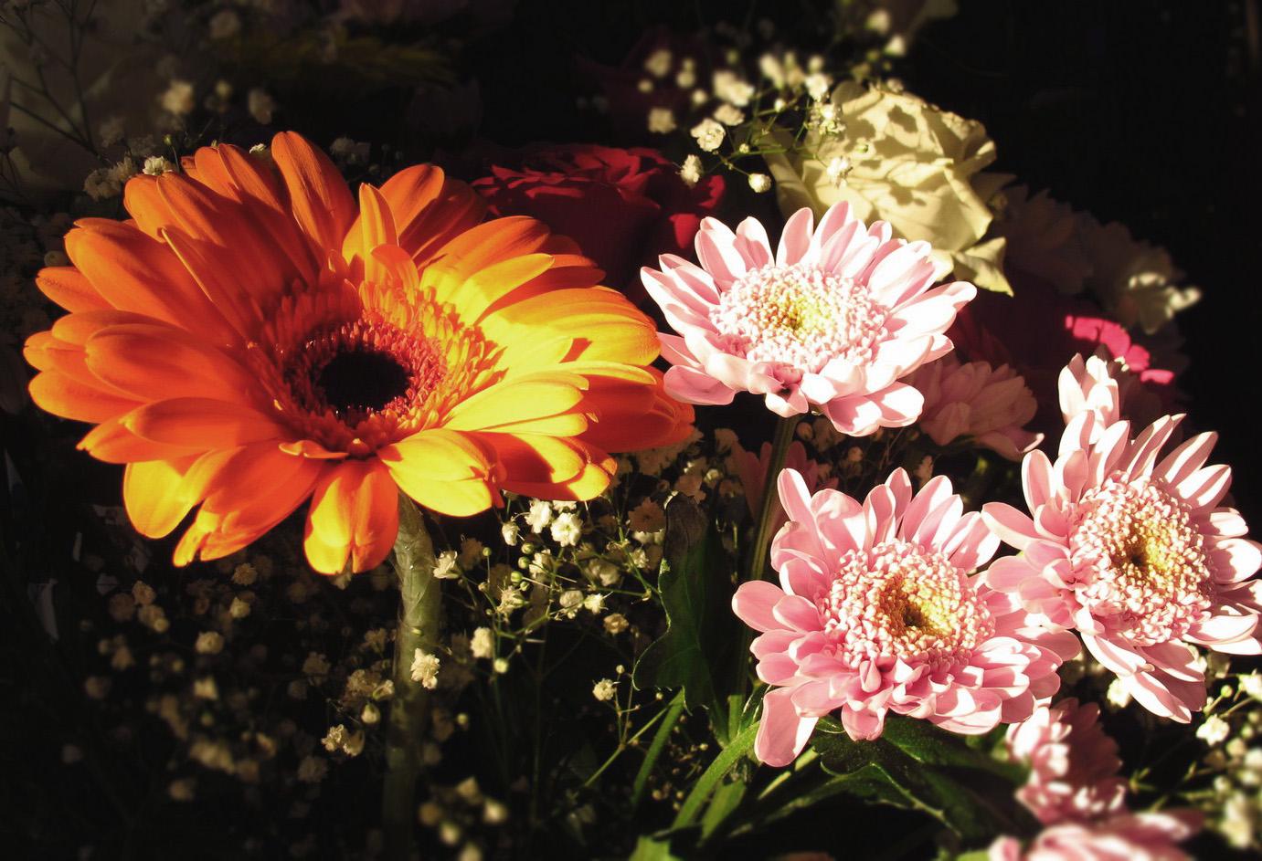 cvetnik