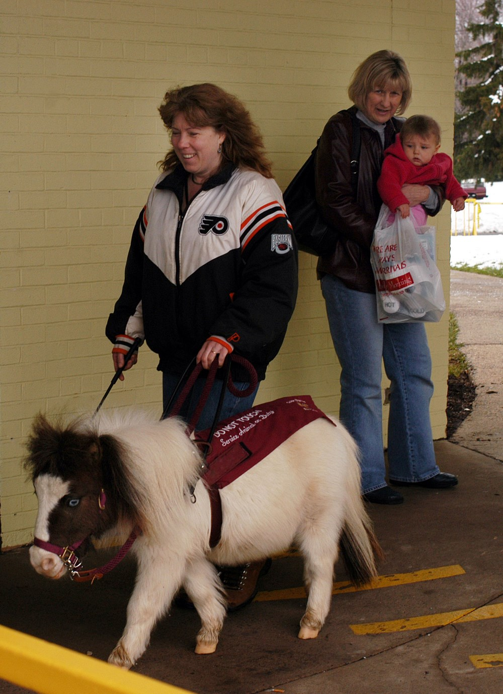 Лошадки породы филабелла служат поводырями